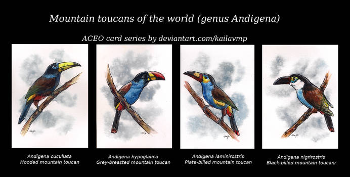 aceo series: mountain toucans by kailavmp