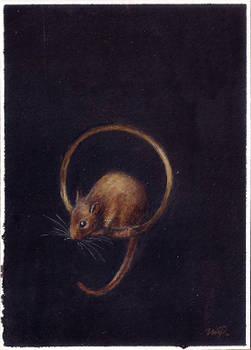 aceo mouse