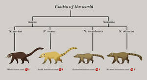 coatis of the world