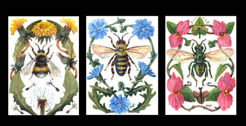 aceo seriers: bees (iatcs)