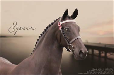 Friesian Horse Pic