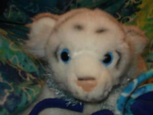 Jeremy: My Stuffed Tiger