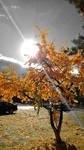 Golden Autumn memories... by Volchonokilli