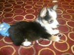 New Puppy - Joseph
