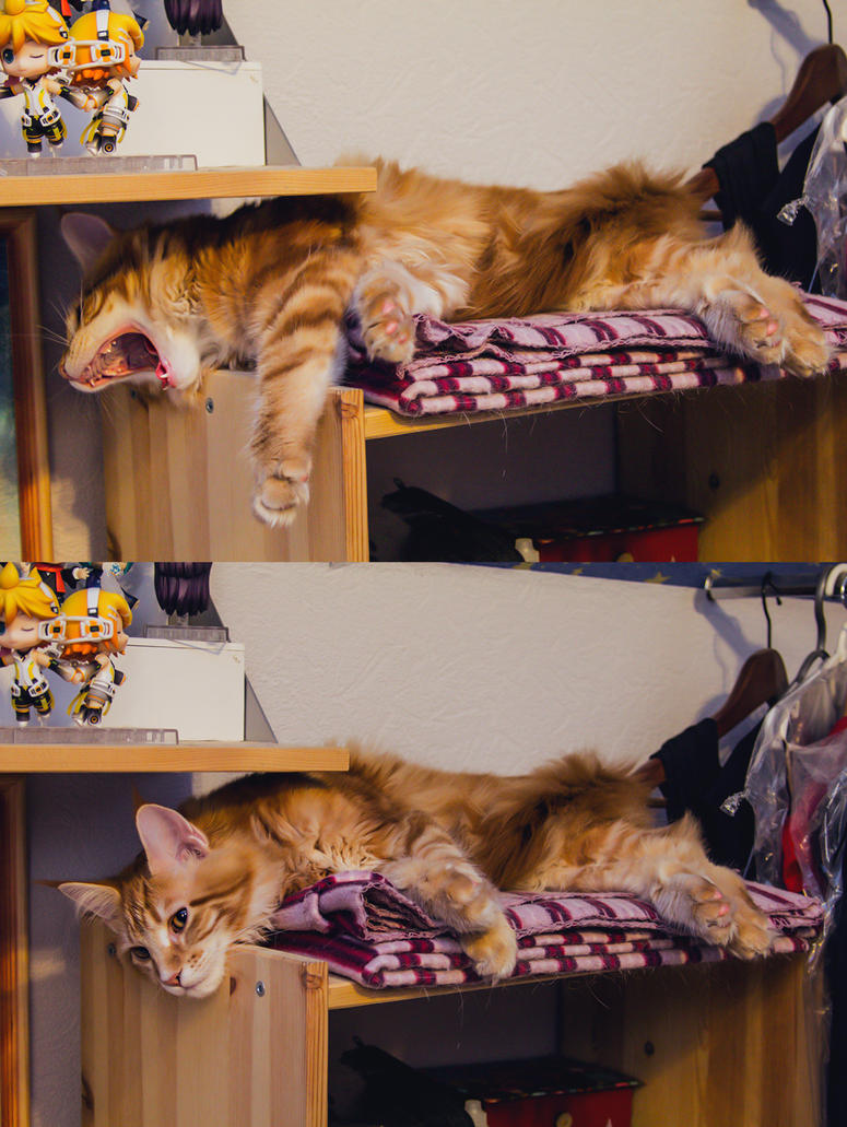 Fenix Cat by RubeeAmadare