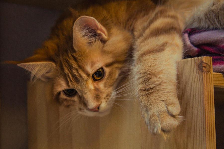 Fenix Kitty Cat by RubeeAmadare