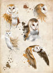 Owls sketches