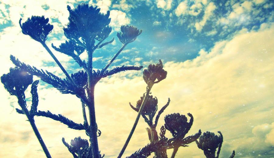 Summer Warmth by Reilune