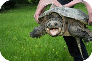 turtle by duhitsmia