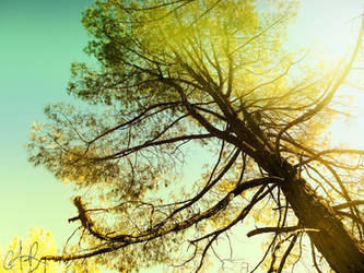 The Tree by c4-r