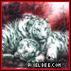 White Tigers by Sanzogirlfire