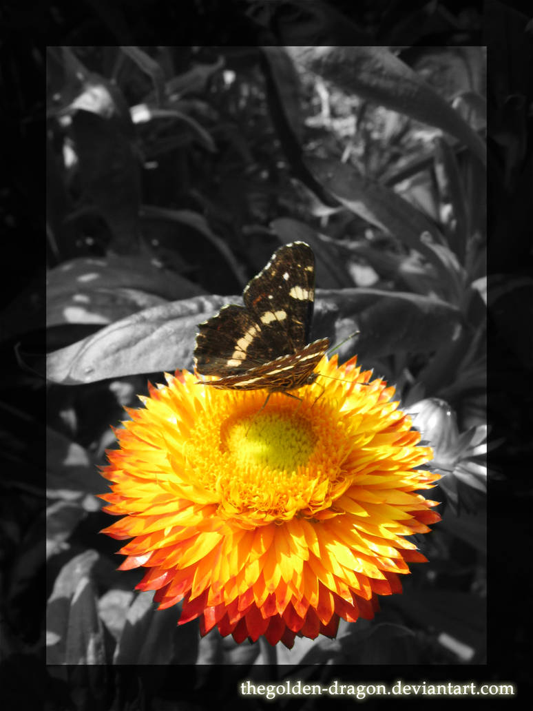 PP - Flower of a Butterfly