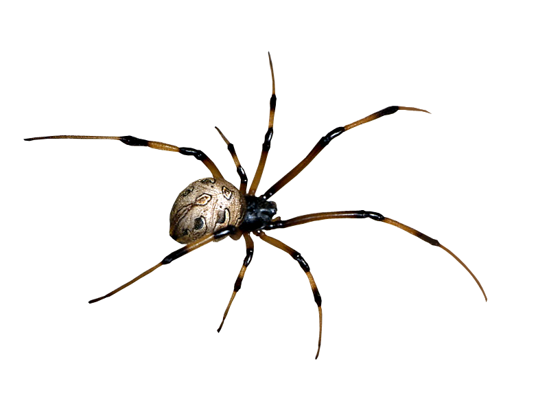 spider web transparent