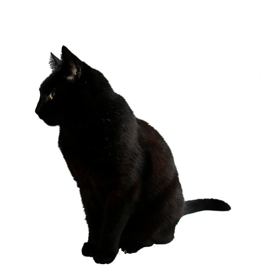 black cat png by camelfobia on DeviantArt