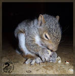 Baby squirrel is eating apple ^^