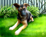 Lua the GS pup - Commission
