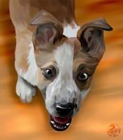 Finn - pet portrait for  smudge-92 by Nojjesz