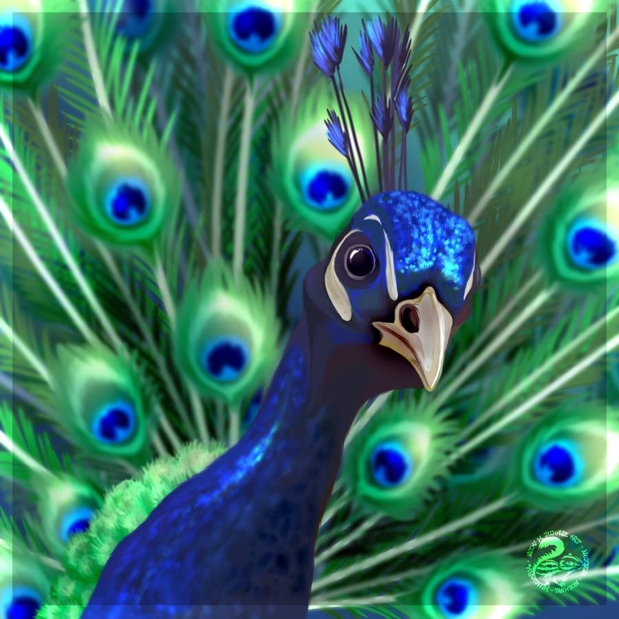 Peacock by Nojjesz