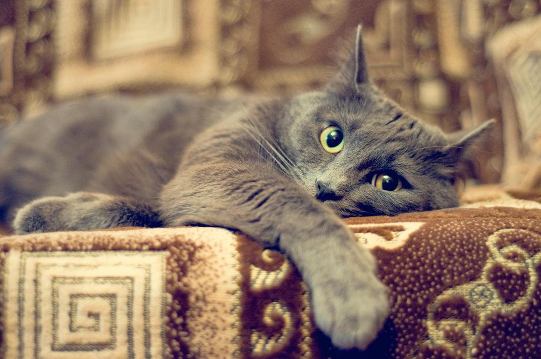 soft kitty, warm kitty by Se1fDestruct