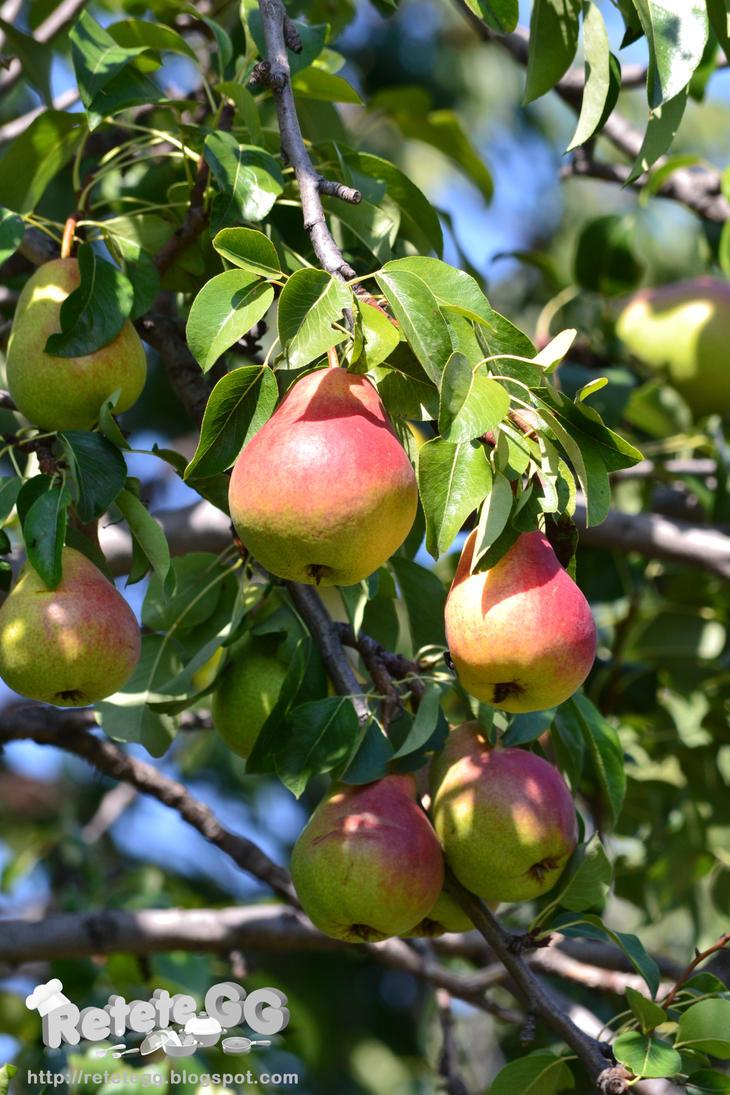 Pears by DanutzaP