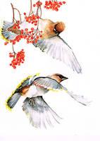 waxwings with roan-tree by Kakiaart
