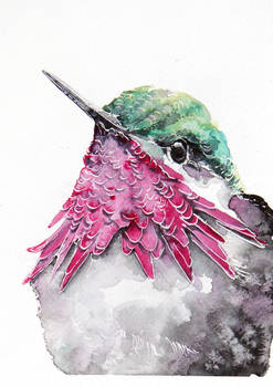 humming-bird, watercolor