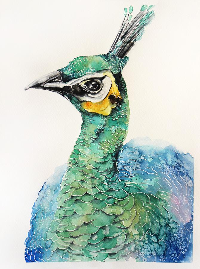 Peacock portrait - Original watercolors painting by Kakiaart