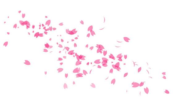 Minimalistic Pink Sakura Petals Wallpaper