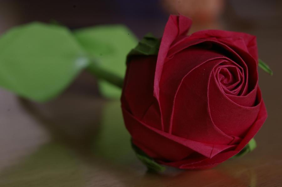 Red pentagonal rose by FC-1032