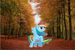 Rainbow Dash in Autumn