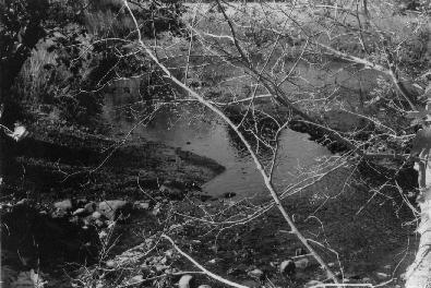 brook by Tawariell
