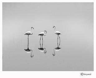 Flamingos by hiergunda