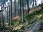 Fair(y) Trail by DawnCR