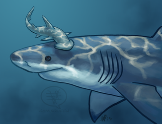 SHARK WEEK 2013 #6 #7- Bonnethead and Great White by comixqueen