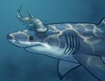 SHARK WEEK 2013 #6 #7- Bonnethead and Great White