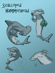 SHARK WEEK 2014 #1- Scalloped Hammerhead by comixqueen