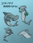 SHARK WEEK 2014 #1- Scalloped Hammerhead