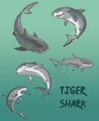 SHARK WEEK 2014 #5- Tiger by comixqueen