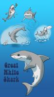 SHARK WEEK 2014 #6- Great White