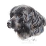 Corb Shepherd Doodle by comixqueen