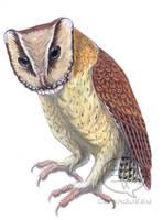 Oriental Bay Owl by comixqueen