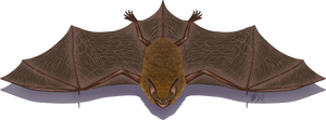 2020MMM - Little Brown Bat