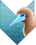 2020MMM - Red-footed Booby R2