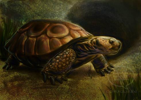 2020MMM - Gopher Tortoise Final Roar