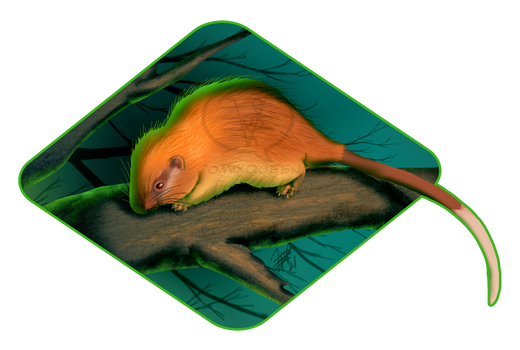2021MMM - Red-crested Tree-rat Round 2