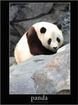 Panda by ziptothestar