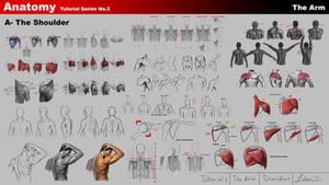 The Shoulder Anatomy - The Arm - Anatomy series