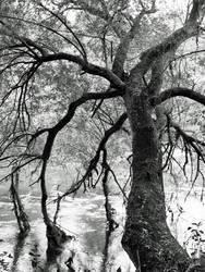 Sad old tree by sowhatimanerd