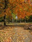 tower grove park autumn 2011