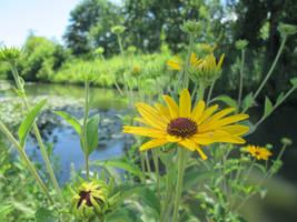 Forest Park Summer 2014 (VOLTA) Nature Conservancy